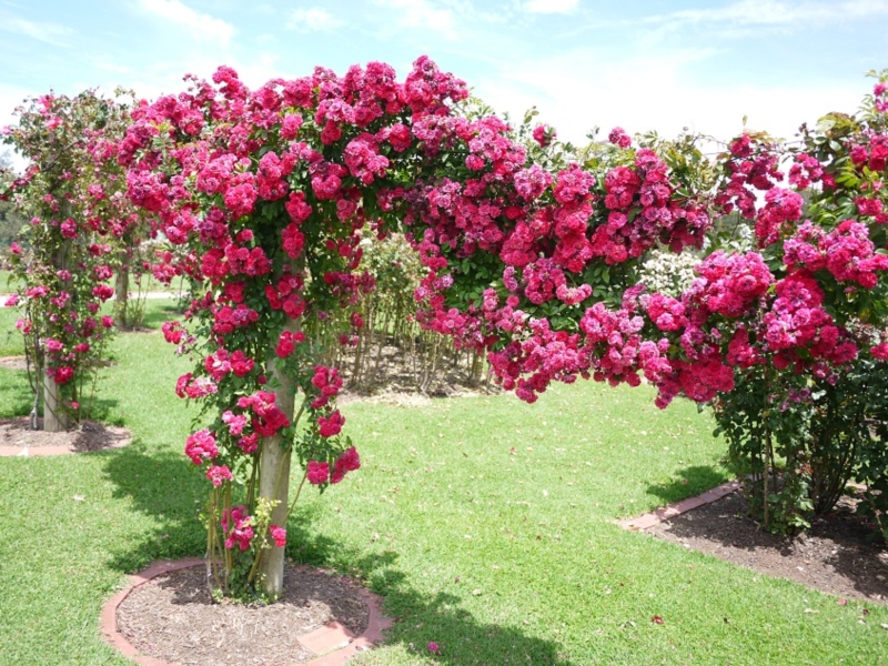 Victoria state rose garden walking maps - What time does victoria gardens close ...