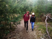 Darebin Parklands loop walk