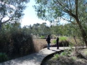 Barwon River Walk