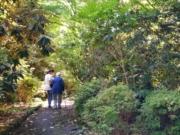 George Tindale Memorial Gardens walk,  Dandenongs
