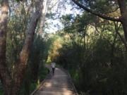 Wilsons Reserve - urban oasis walk