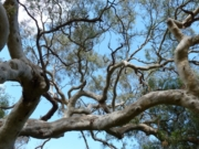 Brimbank Park Nature Trail, Keilor