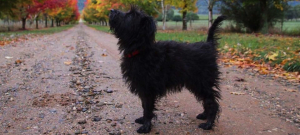 Walks with dog 'off-lead' area