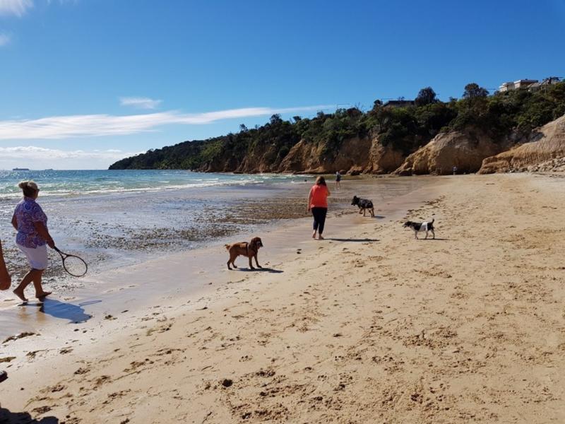 Safety Beach Dog Friendly Walk - Walking Maps