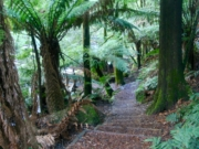 Taggarty Cascades, Yarra Ranges National Park