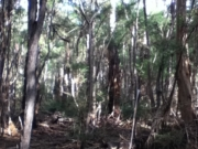 Warrandyte State Park - Blue Tongue Bend