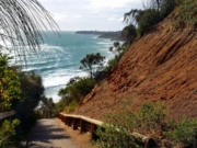 Mount Martha Dog-Friendly Beach Walk