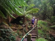 1000 Steps, Kokoda Memorial Walk, Upper Ferntree Gully