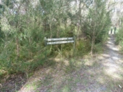 Button Grass Walk (Bunyip State Park)
