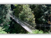 Tarra Bulga National Park - Suspension Bridge