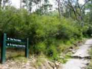 Spring Creek Walk, Buchan Caves Reserve