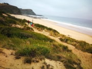 Kilcunda Wildflower Walk (George Bass Coastal Walk)